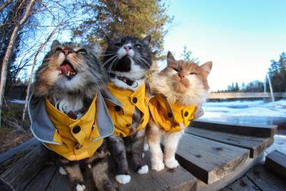 Kissakolmikon kevätretki Koitelissa valittiin huhtikuun lukijakuvaksi – mukana ME-agility-tähti
