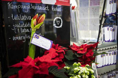 Yksinäisiä vanhuksia ilahdutetaan tänä jouluna kukkalähetyksillä Oulussa – hyväntekeväisyyskampanjassa kuka tahansa voi lähettää kukkia nimettömänä