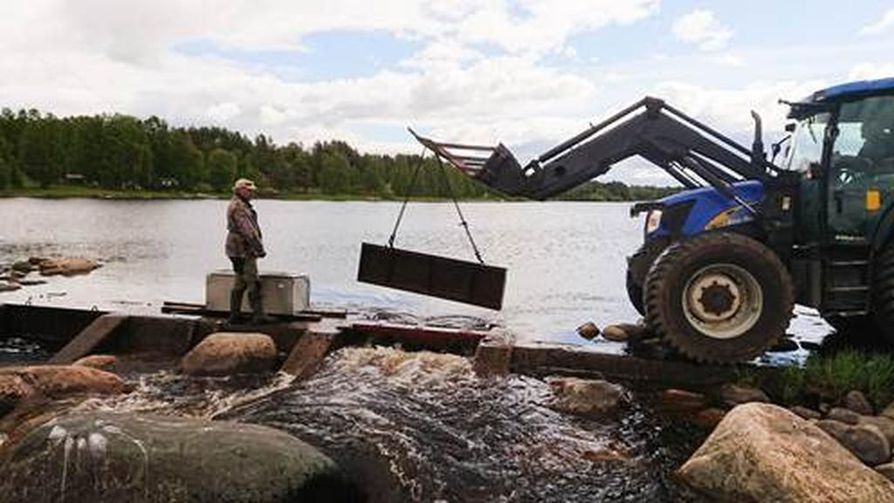 Team Kalan Henri Kylli  ja Kalevi Wiik Etelä- ja Pohjois-Iin jakokunnista avaavat Uiskarin kalatien portin kuusi kilometriä pitkään luonnonuomaan.