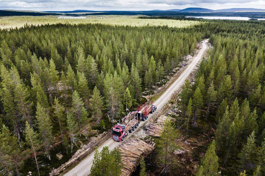 Maankäyttösektori, johon metsät kuuluvat, on tulossa osaksi Euroopan unionin hiililaskentaa ja ilmastopolitiikkaa. Aihekuva.