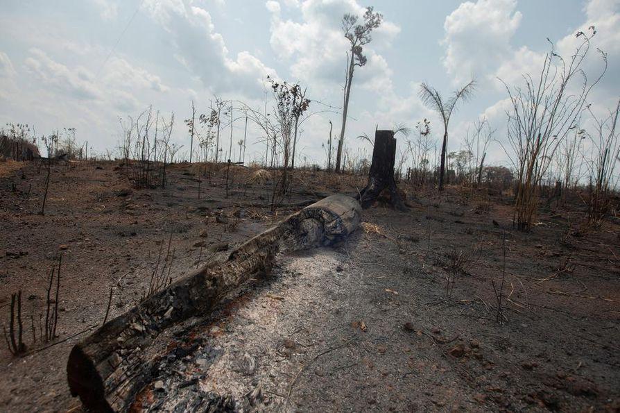 Amazonin sademetsää on palanut Rondonian osavaltiossa Brasiliassa.