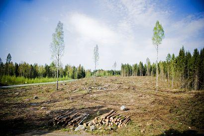 Yli 60 000 suomalaista allekirjoitti kansalaisaloitteen, että avohakkuut valtion metsissä lopetetaan – Kansalaisaloite luovutettiin eduskunnalle