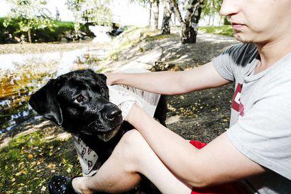Valeletko koiran helteellä kylmällä vedellä? Ei ehkä kannattaisi – Kokosimme vastaukset 10 väittämään helteen vaikutuksista lemmikkiin