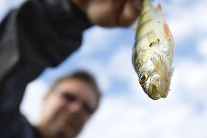 Kalastus on kasvattanut suosiotaan roimasti poikkeusolojen aikana – Metsähallitus: Yleisíä kalastuslupia myyty 30 prosenttia enemmän kuin vuotta aiemmin