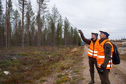 Ärhäkkä tervasroso leviää lännestä: sienitautia tavattu jopa tuhannen hehtaarin alalla Pudasjärvellä