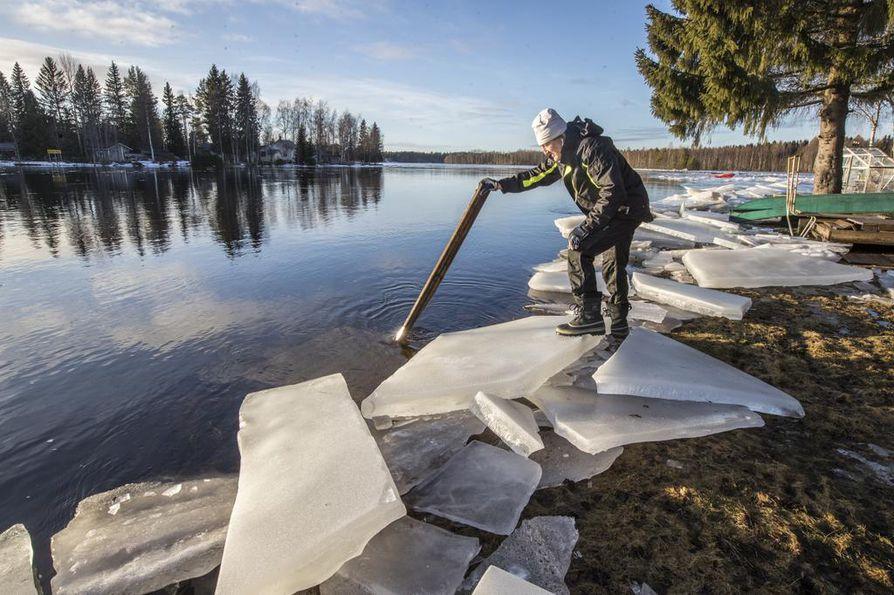 OULU: Pohjois-Pohjanmaan länsiosassa talvi muuttuu äkkiä lumettomaksi. Oulujoen vähäisetkin jäät ovat lähteneet liikkeelle, ja joki on esimerkiksi Heikkilänlahden suunnalla kevättulvan tunnelmissa jo nyt.