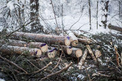 Lakko pysäyttää metsäalan yrittäjien töitä Lapissakin: Metsä Group lopetti hakkuut, Stora Enso jatkaa vielä