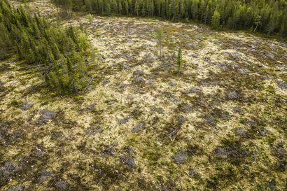 Leppä avohakkuista: Kaikille metsille eivät sovi samat käsittelytavat, uudistunut metsänlainsäädäntö auttaa metsänomistajaa valitsemaan