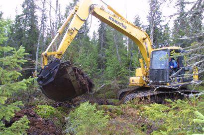 Ojituksen vaikutus metsätalouden kuormitukseen on tuplasti oletettua suurempi – ilmastonmuutos pahentaa vielä tilannetta