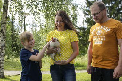 Vesa-Matti Loiriksi nimetty kukko toimii erotuomarina –kanat piristävät kesämökkielämää Laivaniemessä