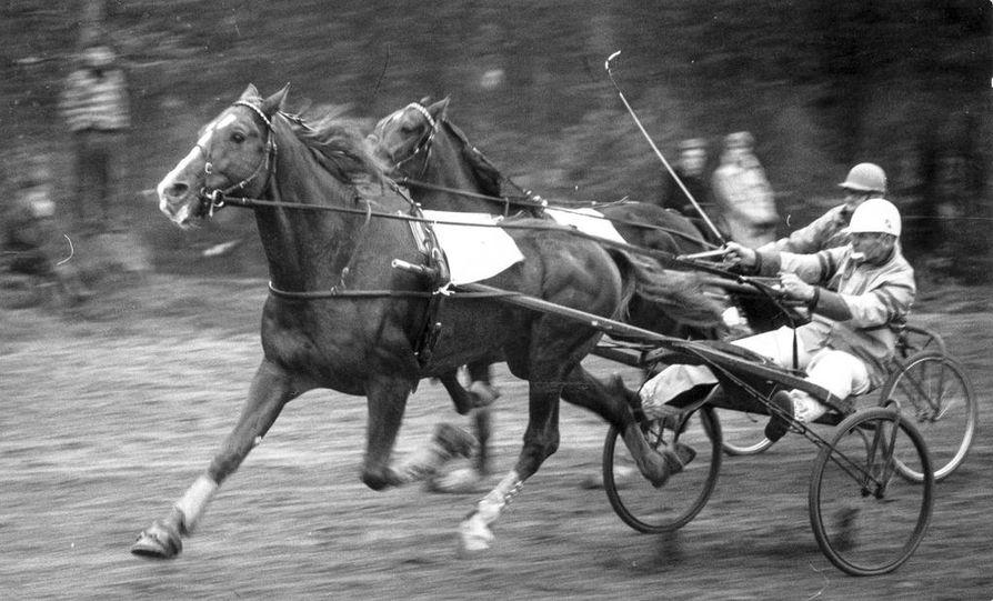 Torniolaiset Jongler ja Volo kuuluivat Lapin ensimmäisiin lämminverisiin. Tässä ne näyttävät vauhtiaan Sodankylän radalla 1970 Oiva Kaartisen ja Sune Pesun ohjastamina.