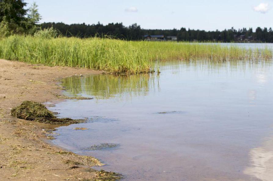 Arkistokuvassa sinilevää Pyykösjärvellä. 17. kesäkuuta otetuissa näytteissä sinilevää ei löytynyt.