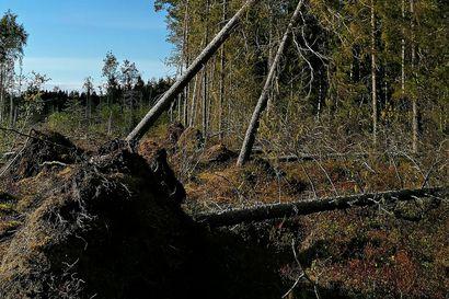 Raahen seudulla on Aila-myrskyn jäljiltä vielä lukuisia sähköttömiä talouksia