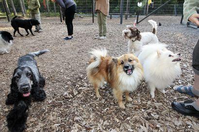 Koirat tarvitsevat koirapuiston, josta ei kaadeta puita