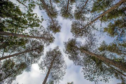 Puheenaihe: Johtaako Metsien Suomi -kampanja harhaan? Metsäteollisuus ry:n metsäjohtaja tähdentää viestinnän perustuvan faktoihin.