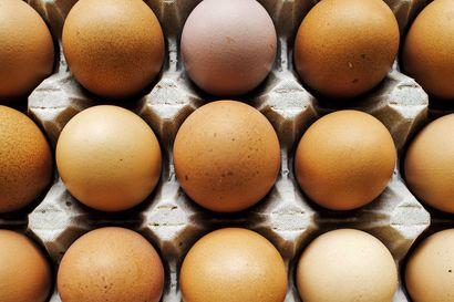 Kaksi erää kananmunia vedetään myynnistä salmonellariskin vuoksi – kananmunia myyty kaupoissa joulun molemmin puolin