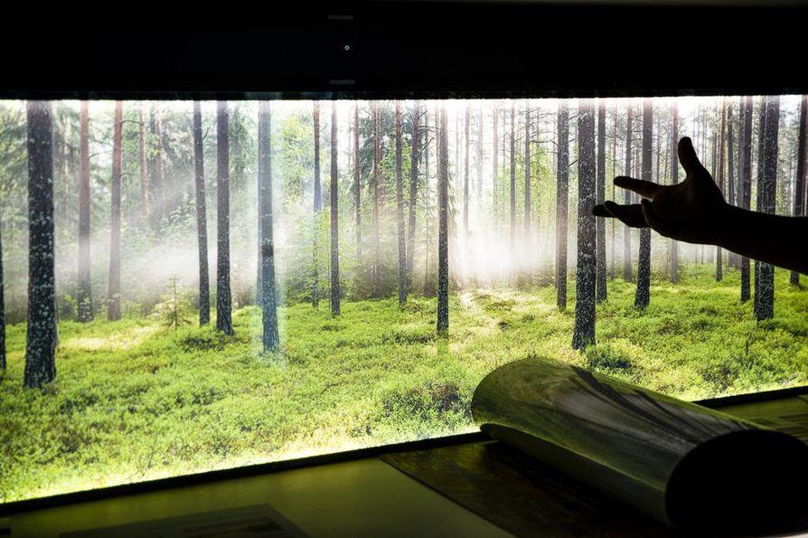 Vähän vihreyttä ja valoa nuutuneeseen syysaamuun? Esimerkiksi keittiön välitilaan asennettuun valotauluun voi helposti vaihtaa valokuvaa.