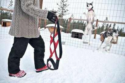 Sunnuntaina alkaa taas koirien kiinnipitoaika – erittäin tärkeä luonnoneläinten pesintärauhan vuoksi