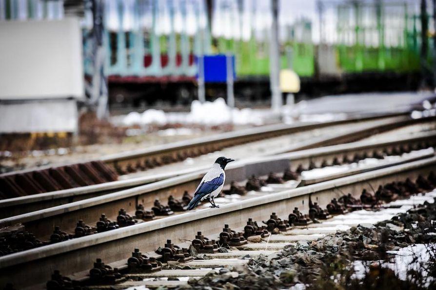 Valtio perustaa uuden yhtiön edistämään rataverkon kehittämistä. Pohjoisessa kaksoisraide ulottuu Ylivieskaan mutta ei Ouluun.