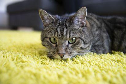 Pelastuslaitos onki välikatolle pinteeseen jääneen kissan turvaan Torniossa sunnuntaiyönä