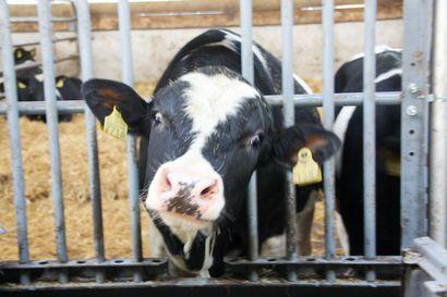 Turmeleeko tuuli eläinten terveyden – kartoitus avaa epäilyjä tuulivoiman haitoista