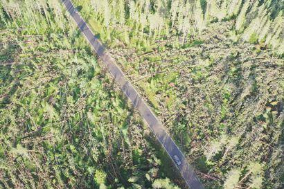 Dronevideo: Syöksyvirtaus kaatoi puita laajalta alueelta Sanginjoella