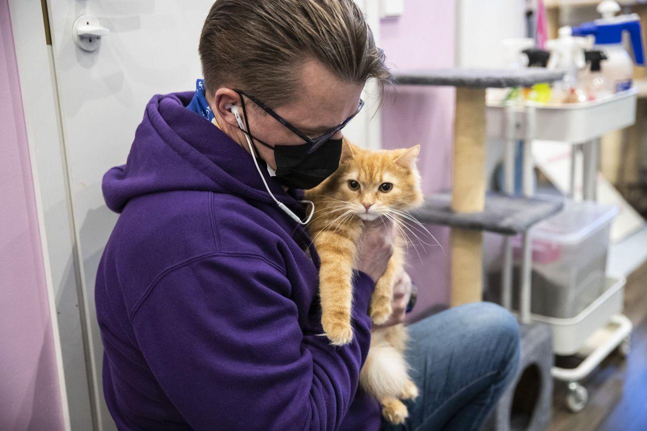 Löytöeläimet kovilla: Kissa paleltui pystyyn pakkasessa – Oulun Poratien eläinlääkäri kertoo lemmikkien vaivoista talvella