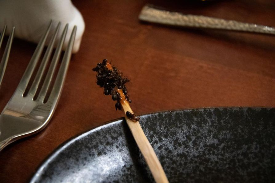 Maistuisiko murkkutikku? Jyrki Tsutsunen tarjoilee pakastettuja muurahaisia kuusenoksaan sivellyllä käpytahnalla.