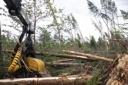 Paula-myrskyn tuhoamia metsäalueita mahdollista ehdottaa suojelukohteiksi – ELY-keskuksen asiantuntijan mukaan suojelu voi olla korjuuta taloudellisesti parempi vaihtoehto