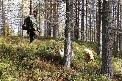 Vapaa metsästysoikeus vaarassa