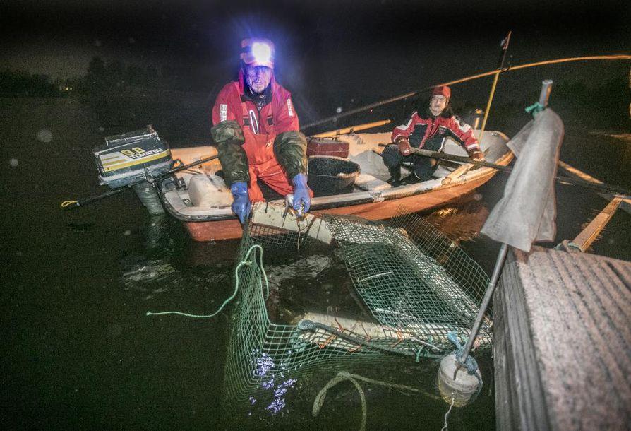 Markku (vas.) ja Mauri Vitikka pistävät emokalat Illin venelaiturin sumppuun.