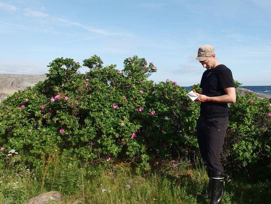 Panu Kunttu on kartoittanut pitkään kurtturuusuesiintymiä erityisesti Saaristomerellä.