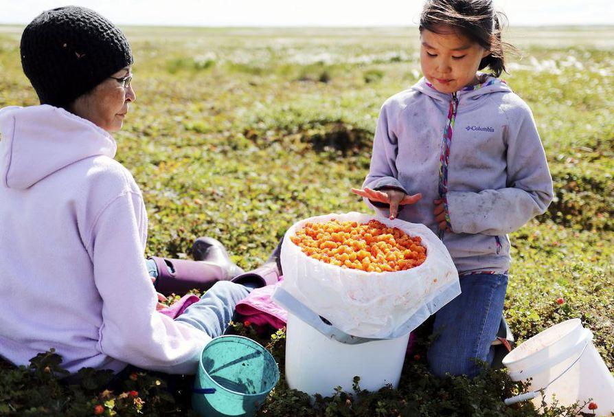 Chefornak on yksi pikkukylistä meren rannalla. Kuvassa kyläläinen Bernadette Lewis hillastamassa lapsenlapsensa kanssa.