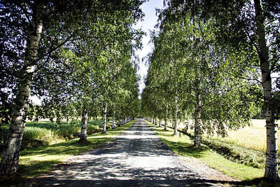 Tiedot yksityisteistä Pohjois-Pohjanmaalla ja Kainuussa ladattiin tienhoito.fi-palveluun kesäkuussa.