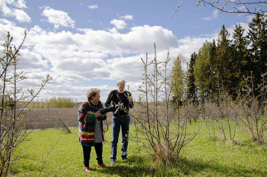 Riitta Angervuo ja Aarre Leskinen eivät ole akateemisia tutkijoita vaan kasviharrastajia. He kokevat olevansa vapaita kertomaan havainnoistaan.