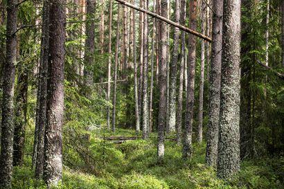 Nyt visaillaan metsätiedossa: Gumeruksen koulua käyvä Erika Nikola selvitti tiensä Metsävisan nettifinaaliin 21 000 nuoren joukosta