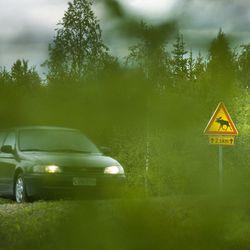 Autojen lisäksi teillä liikkuvat nyt myös villieläimet – Kolaritilanteessa kuljettajalla on aina eettinen velvollisuus tarkistaa eläimen tila