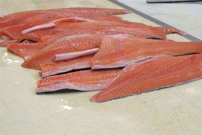 Norjan kalatalousministeri: Pekingin koronavirusrypäs ei ole lähtöisin norjalaisesta lohesta