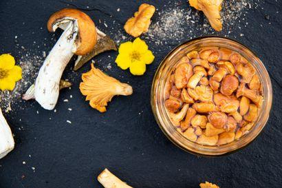 Joko sienikastikkeet ja -salaatit maistuvat puulta? Näin hyödynnät syksyn sienisaaliin uusilla tavoilla