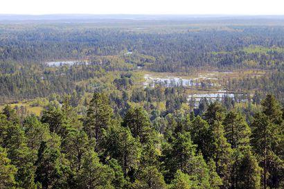 Metsähallitus aloittaa uuden luonnonvarasuunnitelman teon – Suunnitelma-alue on saamelaisten kotiseutualuetta ja erityistä poronhoitoaluetta