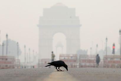 """Olosuhteet Intian """"kaasukammiossa"""" hellittivät hiukan tiistaina – Peltojen polttaminen jatkuu, vaikka ilmanlaatu on heikko"""