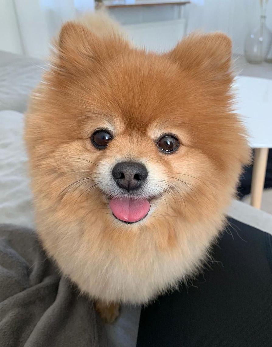 Nuga-koira oli ilopilleri, kertoo Sofia Partanen.