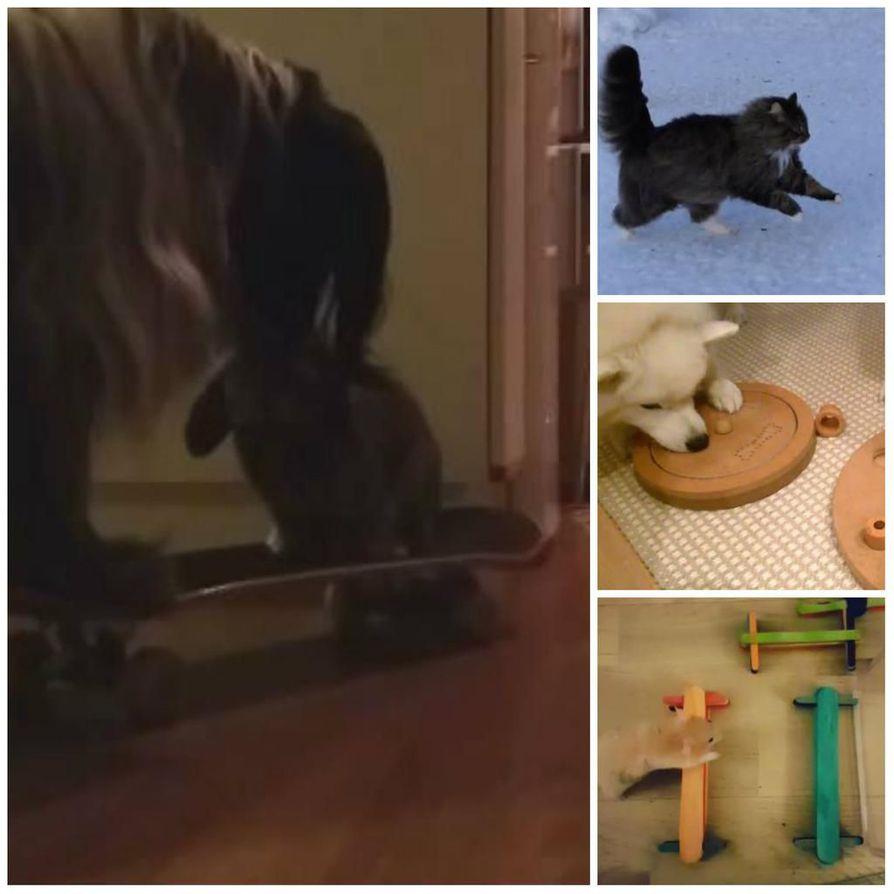Videoita eläinystävien tempauksista lähetettiin runsaasti Kalevaan.
