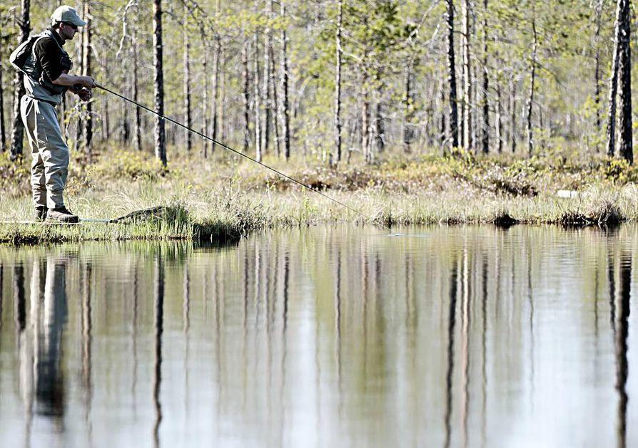 Aurinko on hellinyt Tamuslammen perhokalastajia. Lammen omistaa Oulun kaupunki ja Oulun seudun perhokalastajat vuokraa sitä. Salakalastajat ovat seuralle riesa, minkä vuoksi se on tarkka muun muassa lammen sijainnin kertomisen suhteen.