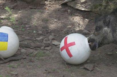 Elvis-visayanpartasika ennustaa, että Englanti voittaa tänään Ukrainan