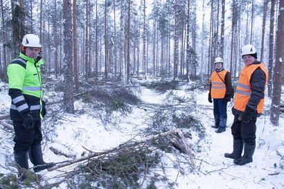 Metsänomistaja voi toimillaan vaikuttaa paitsi metsän kasvuun niin myös ilmastoasioihin