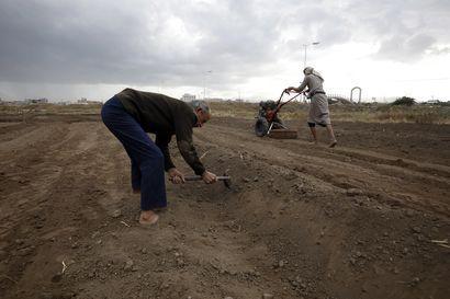 Laaja nälänhätä uhkaa Jemeniä – lähes puolet maan väestöstä kärsii jo ruoan puutteesta