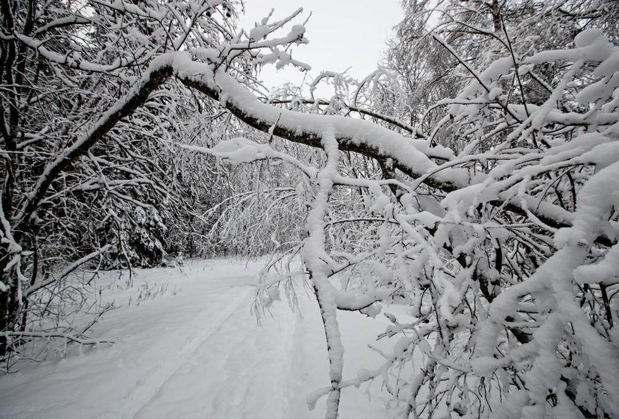 Talvinen näkymä Hietasaaressa. Arkistokuva.
