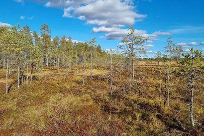 Valtion suojelukseen siirtyy yli 1300 hehtaaria luontoarvoltaan merkittäviä suoalueita Muhokselta ja Pudasjärveltä