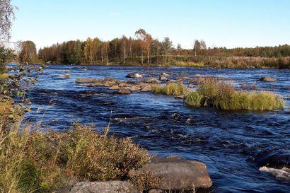 Iijoen latvavesien puroja kunnostetaan kesän aikana - kohteina kuusi puroa Pudasjärvellä ja Taivalkoskella